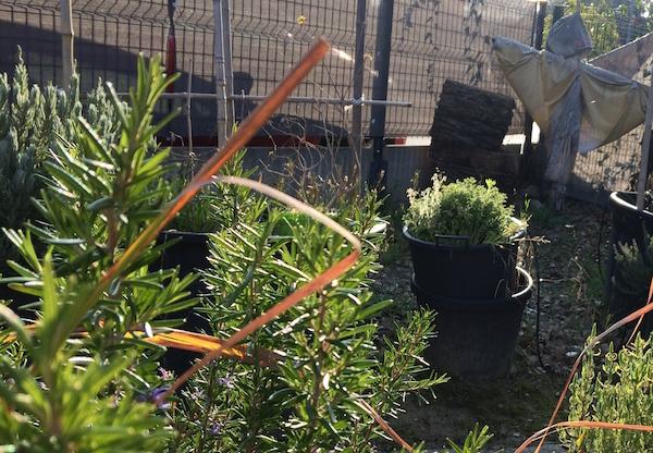 Fondation-GSF-exterieurs-plantes-aromatiques