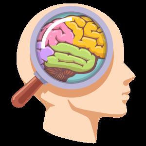 cerveau-fonctions-loupe